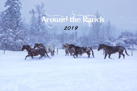 2019 Full Color Calendar - Around the Ranch