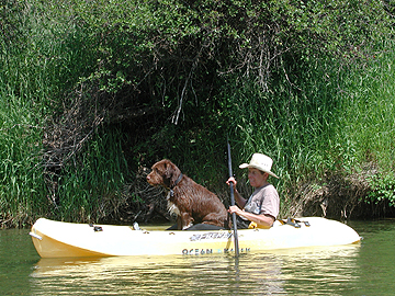 Wire haired Griffon in Kayak