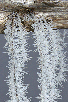 frost on horse hair